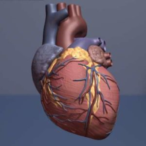The study, published in the June 22, 2016 issue of Science Translational Medicine, points to a potential new way of improving heart function and treating dangerous arrhythmias by compensating for damaged cardiac muscle and enabling living heart muscle to work more efficiently.—medicalxpress.com image